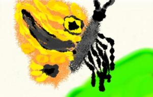 Brushster 5th Grade Student Example - Insect Study